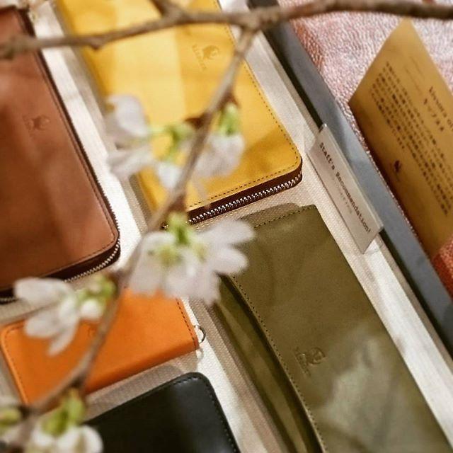 ここのところ肌寒くて、冷たい雨など降りましたが、風邪など引かれてないですか?桜の開花が待ち遠しいですねこちらはkissoraの、キメが細かく艶やかな仔牛の革を使用した、キップヌメというシリーズです。お財布、バッグと、発色が良く春らしいカラーを揃えてお待ちしておりますイオンモール武蔵村山サックスバージーンに、どうぞお立ち寄り下さいませ キップヌメ キーケース¥5800 (税別)ラウンド長財布¥16500(税別) 他#キソラ#サックスバー#サックスバージーン#革小物#長財布#牛革#春物#おしゃれ